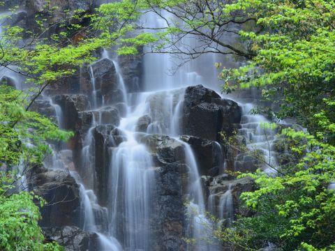 新緑の常清滝