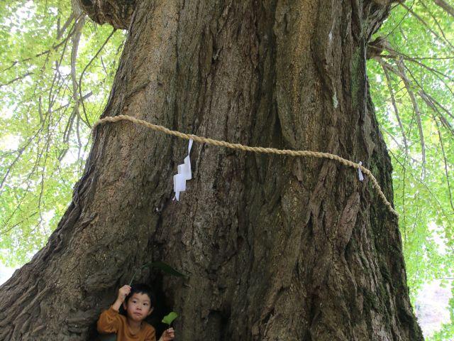 [入 選] 大樹と小人 (河村 篤司(広島市))